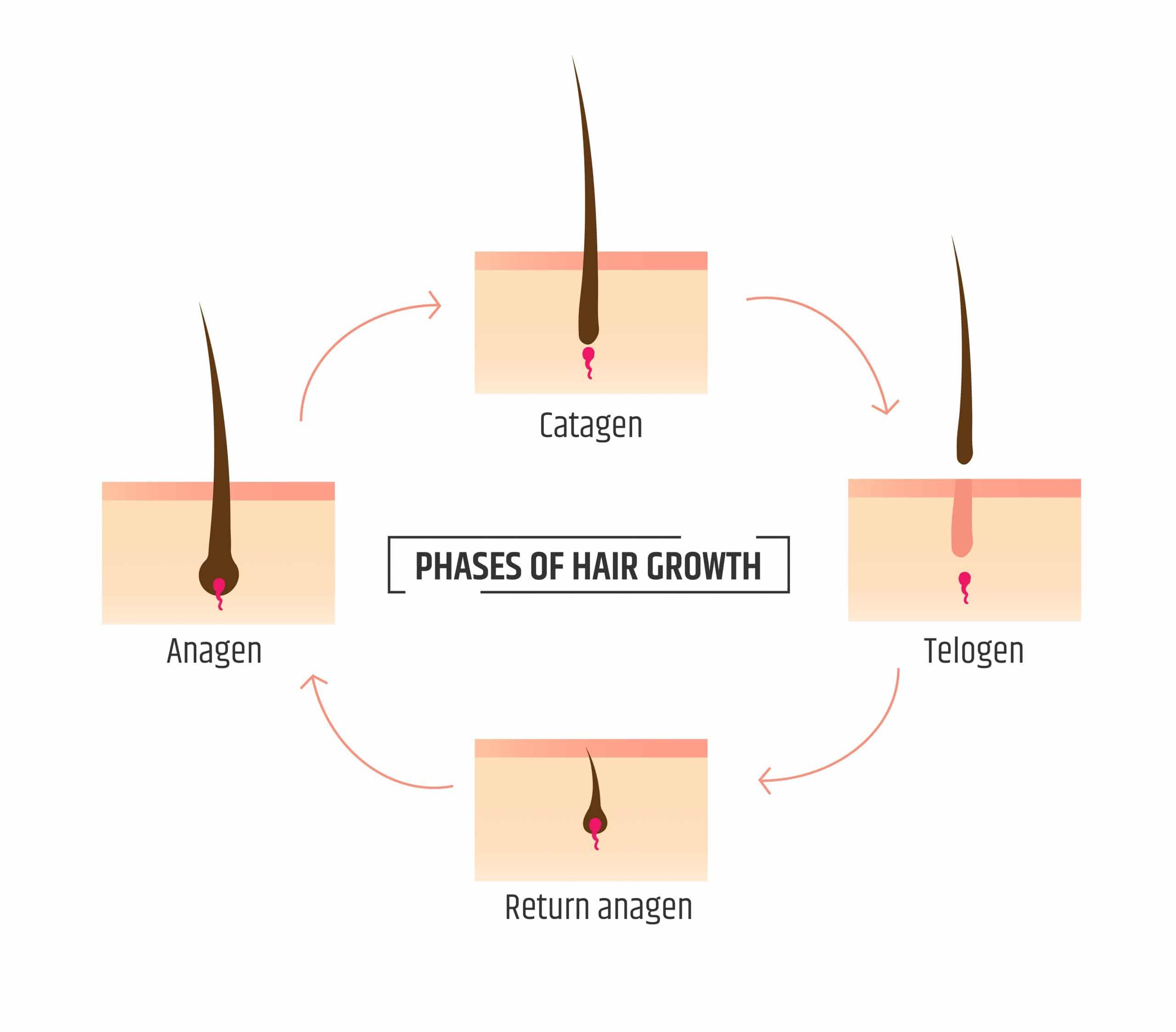 Hair growth and balding